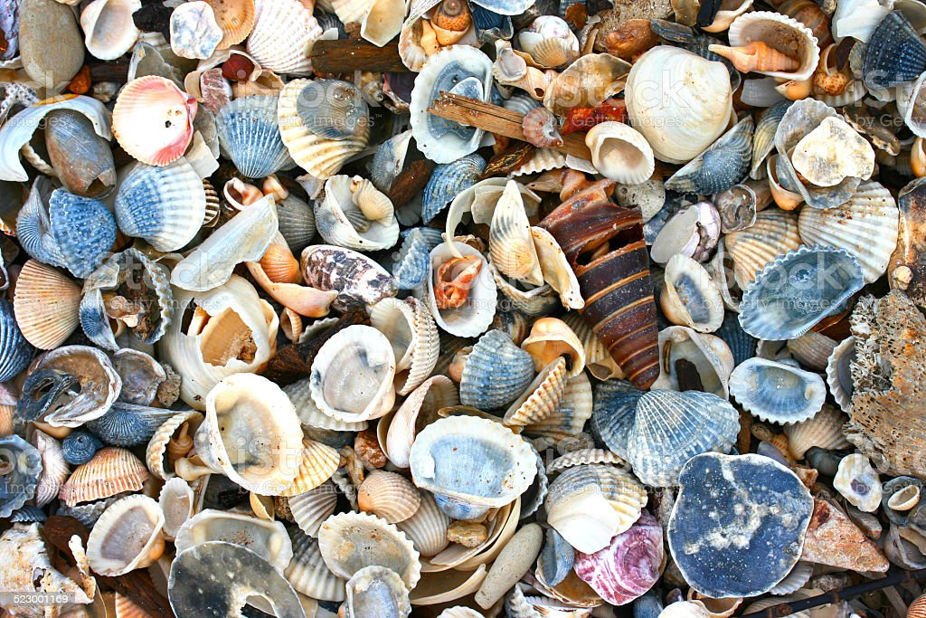 variety of sea shells stock photo