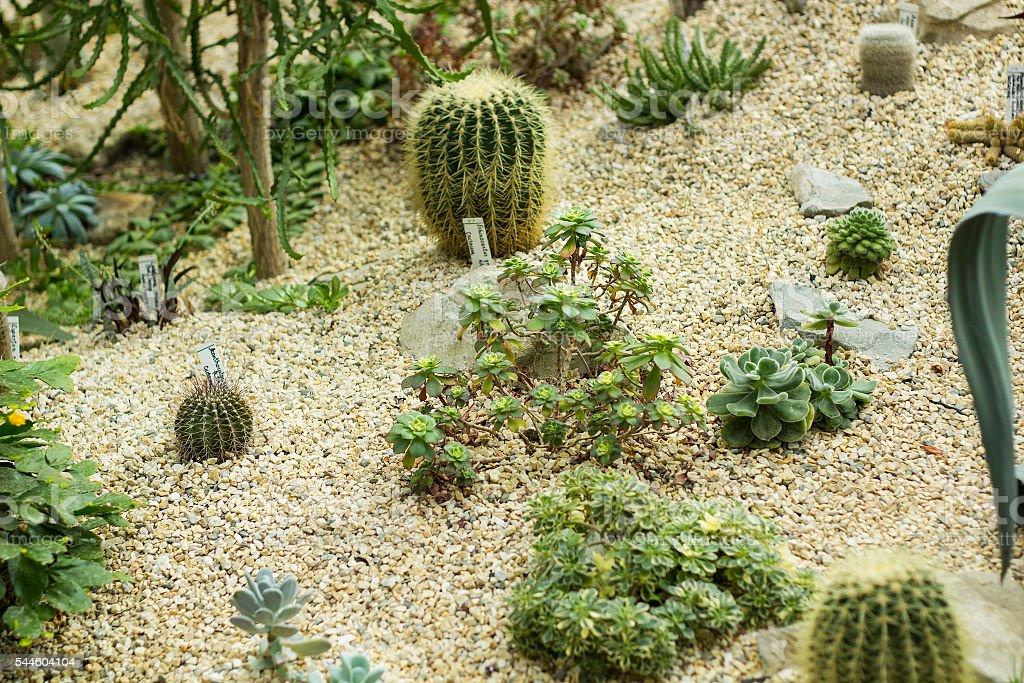 Variety of small beautiful cactus. Desert in miniature stock photo