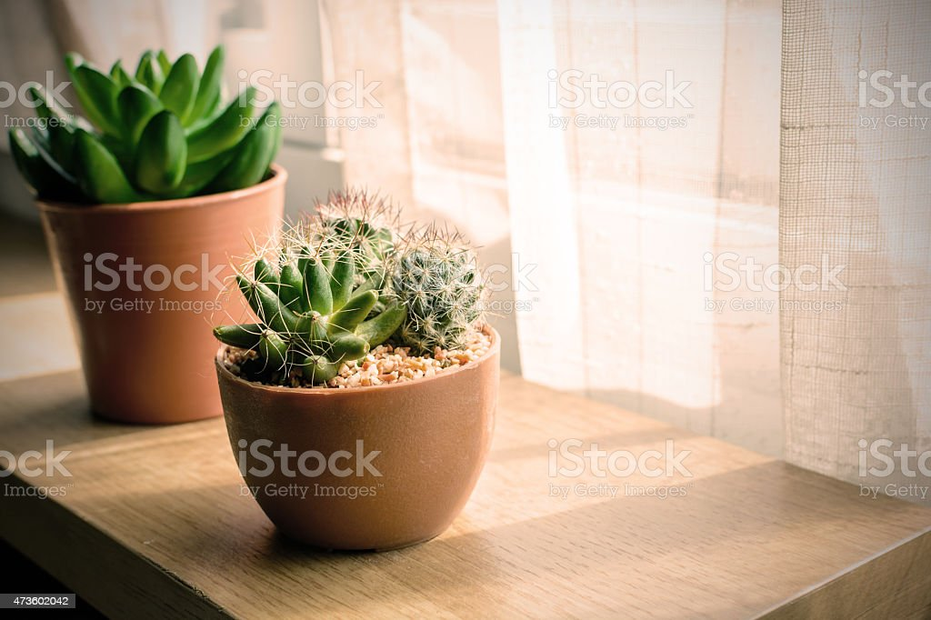 A variety of small cactus plants in a pot stock photo