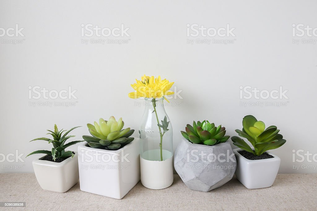Variety of Succulent in pots, yellow flower in glass bottle stock photo