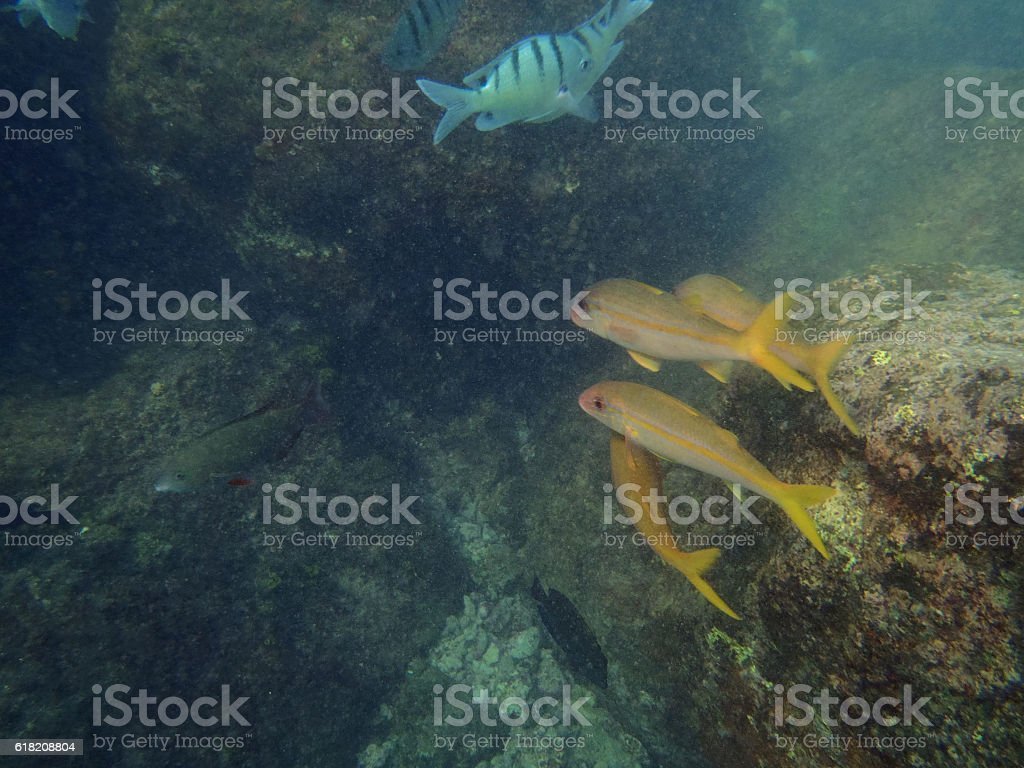 Variety of Tropical fish swim by reef stock photo