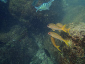 Variety of Tropical fish swim by reef