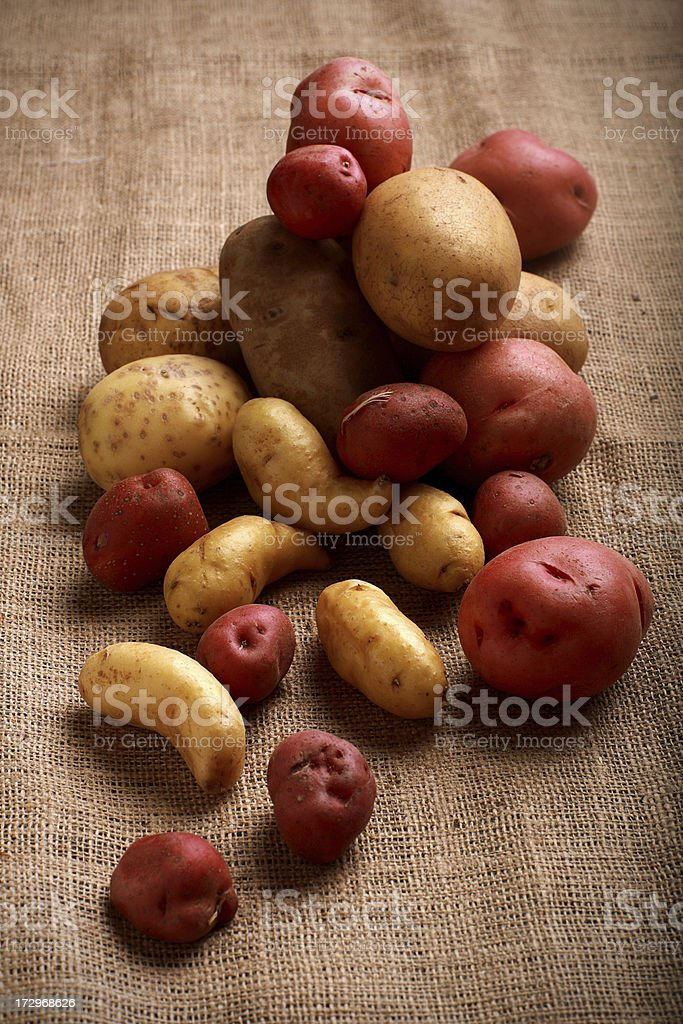 A variety of uncooked potatoes piled on burlap stock photo