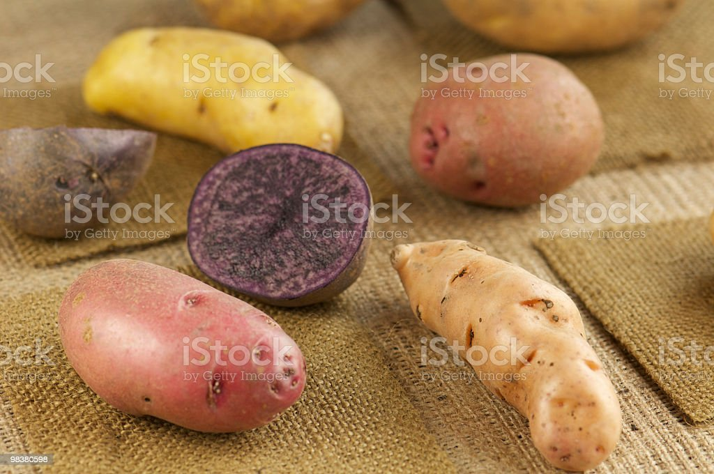Variety of Whole Potatoes on Burlap royalty-free stock photo