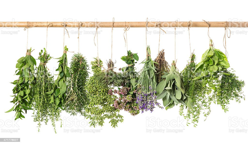 varios fresh herbs hanging isolated on white stock photo
