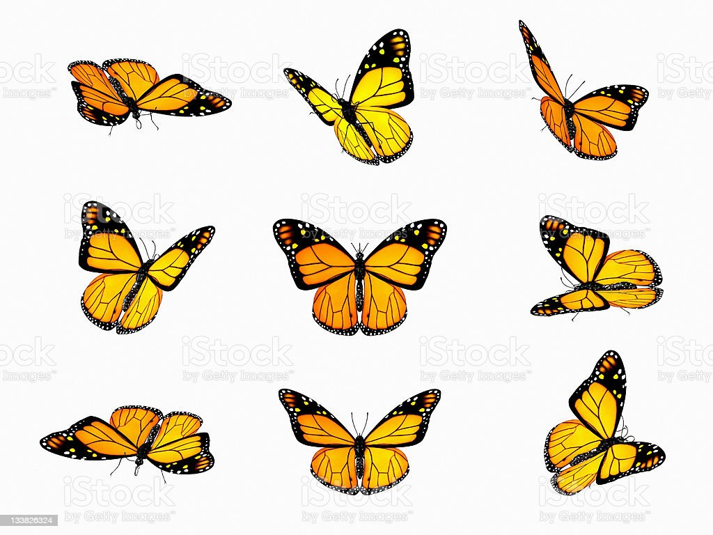 Various angles of butterflies flying on a white background stock photo