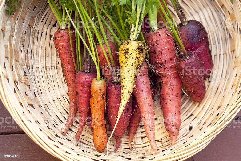 Various colored organic carrots. royalty-free stock photo