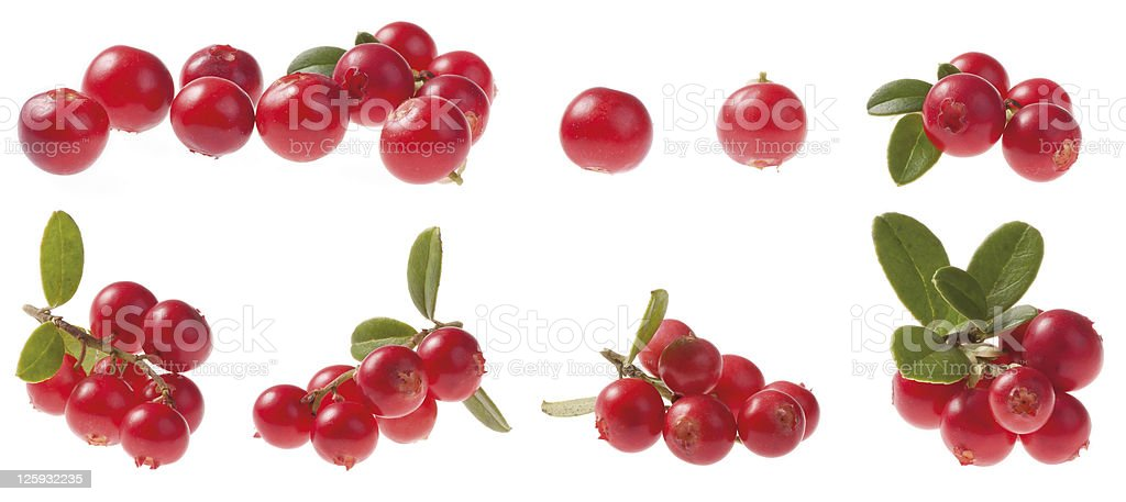 Various Cowberry stock photo