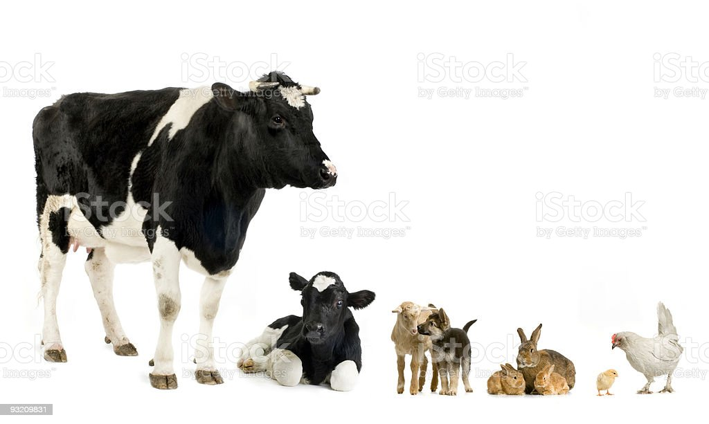 Various farm animals like cow, goat, chicken, rabbit and dog royalty-free stock photo