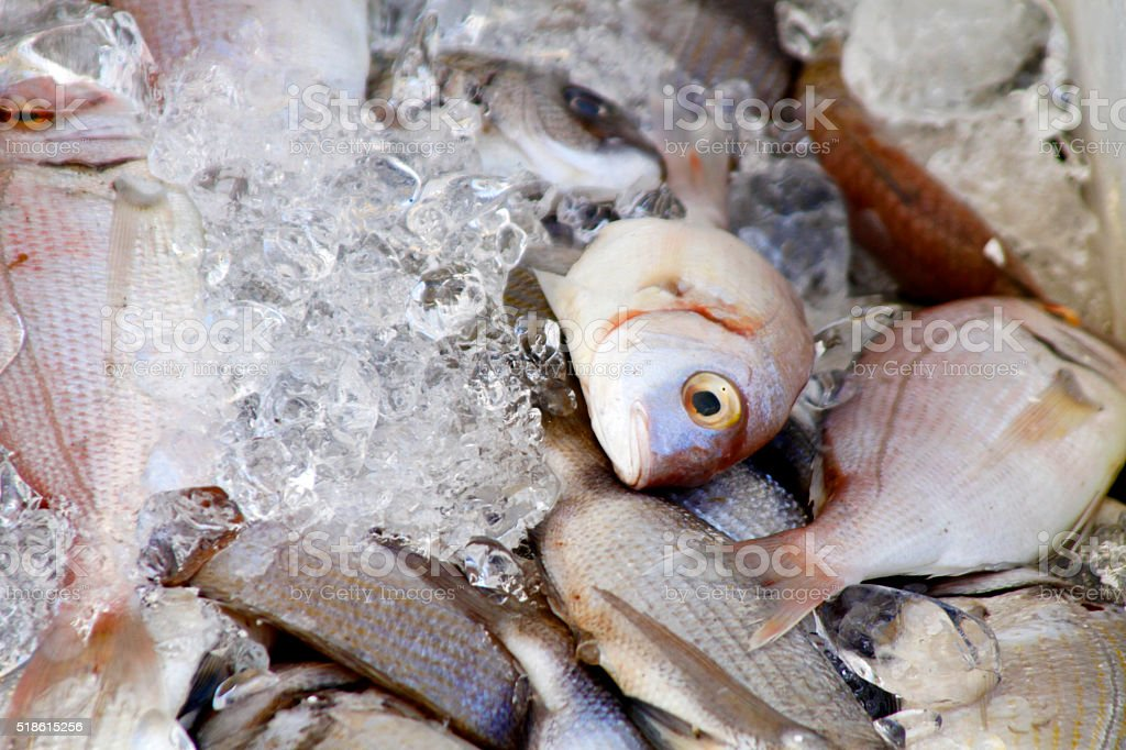 various fishes on ice stock photo