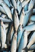 Various fresh fish and seafood