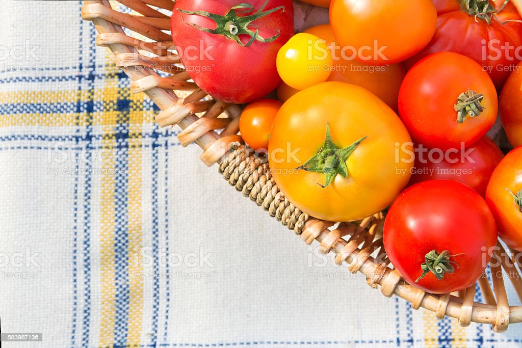Various fresh picked organic tomatoes in top view stock photo