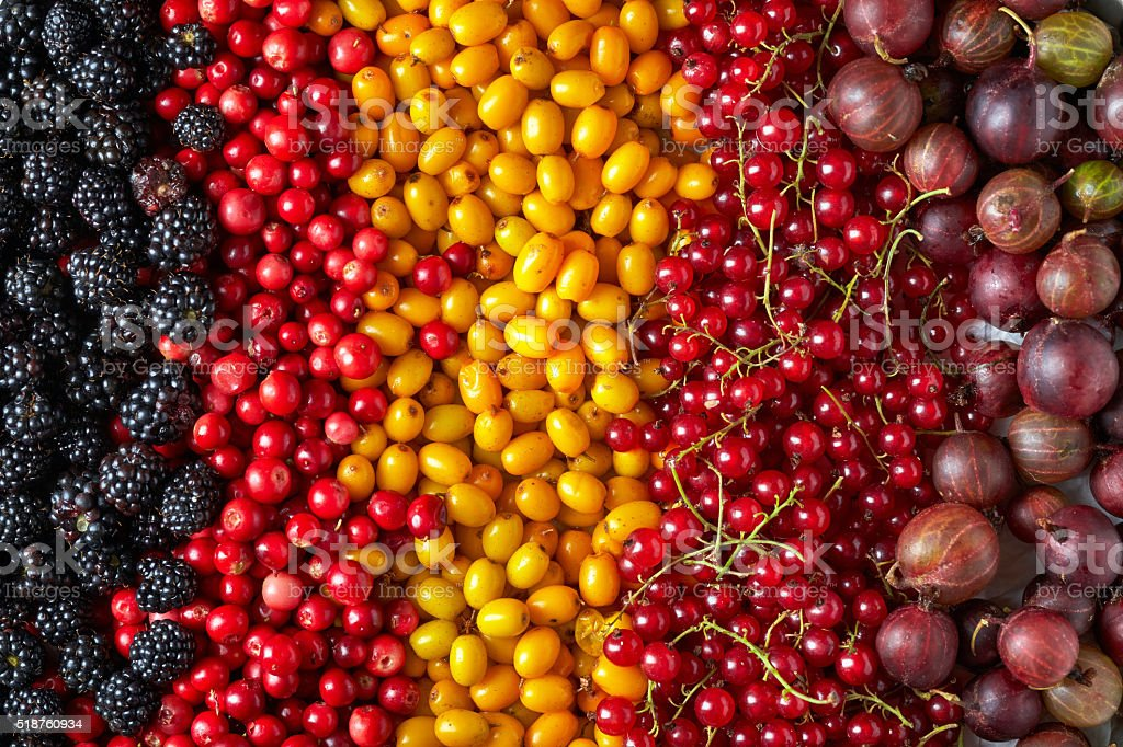 various kinds of berries stock photo