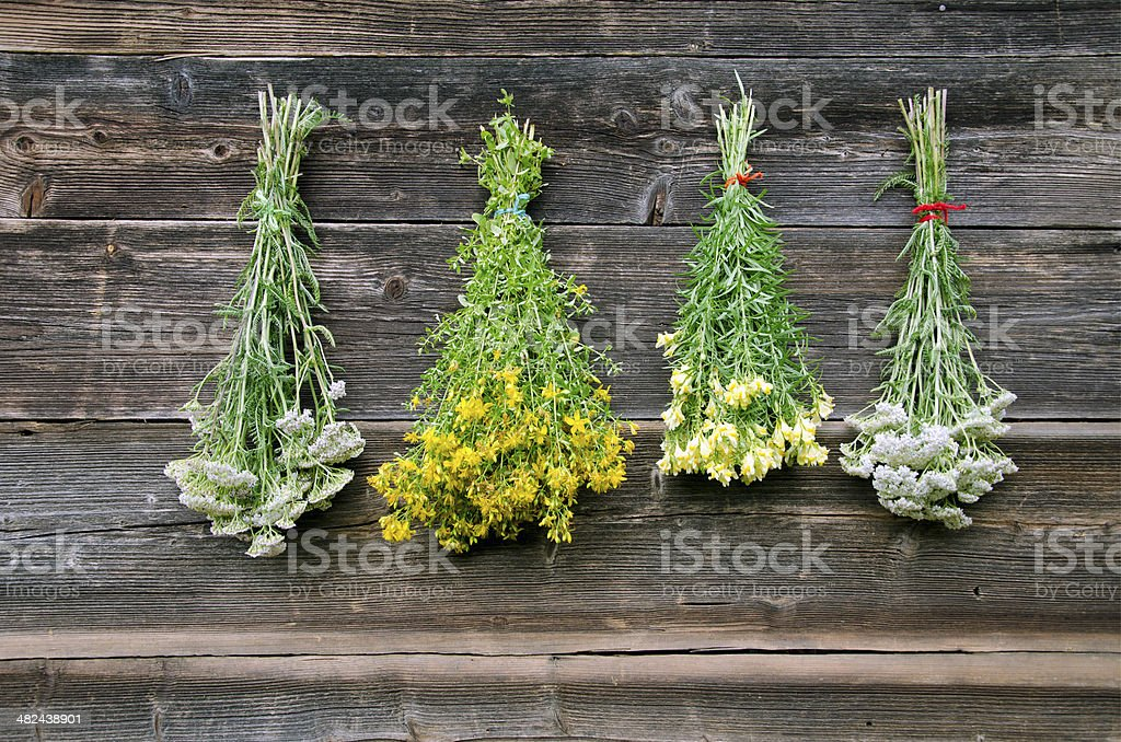 various medical herb bunch on wall stock photo