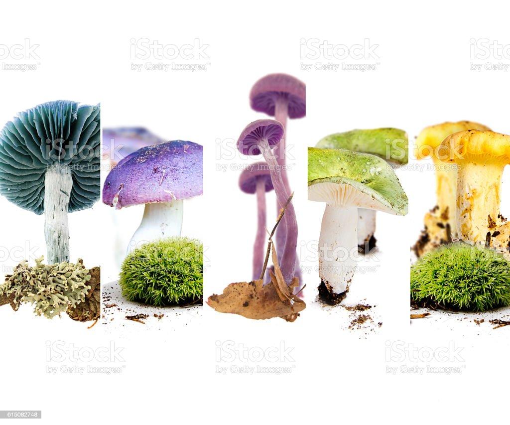 Various Mushroom Mix stock photo