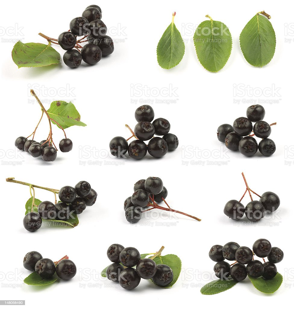 Various photos of black chokeberry stock photo