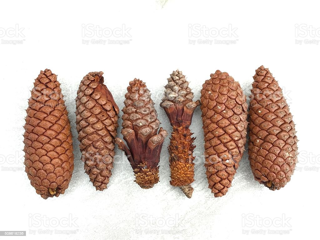 Various pine cones on a gray white tile surface stock photo