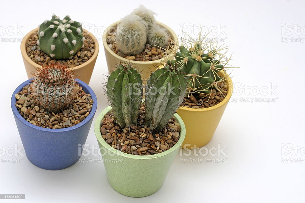 Various Potted Cacti royalty-free stock photo