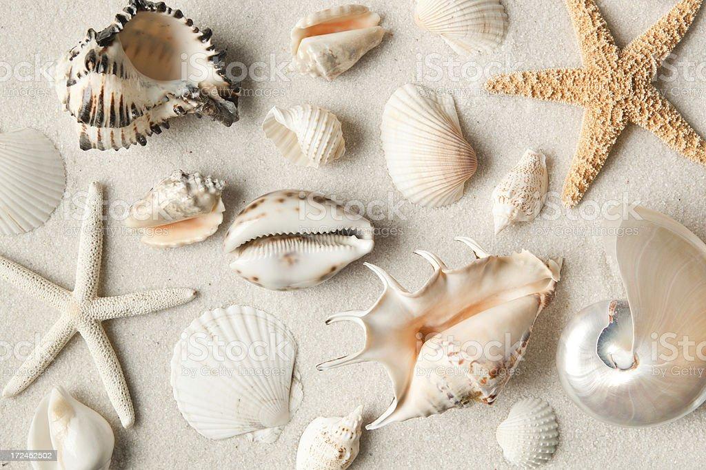 Various Seashell and Starfish on Sandy Beach royalty-free stock photo