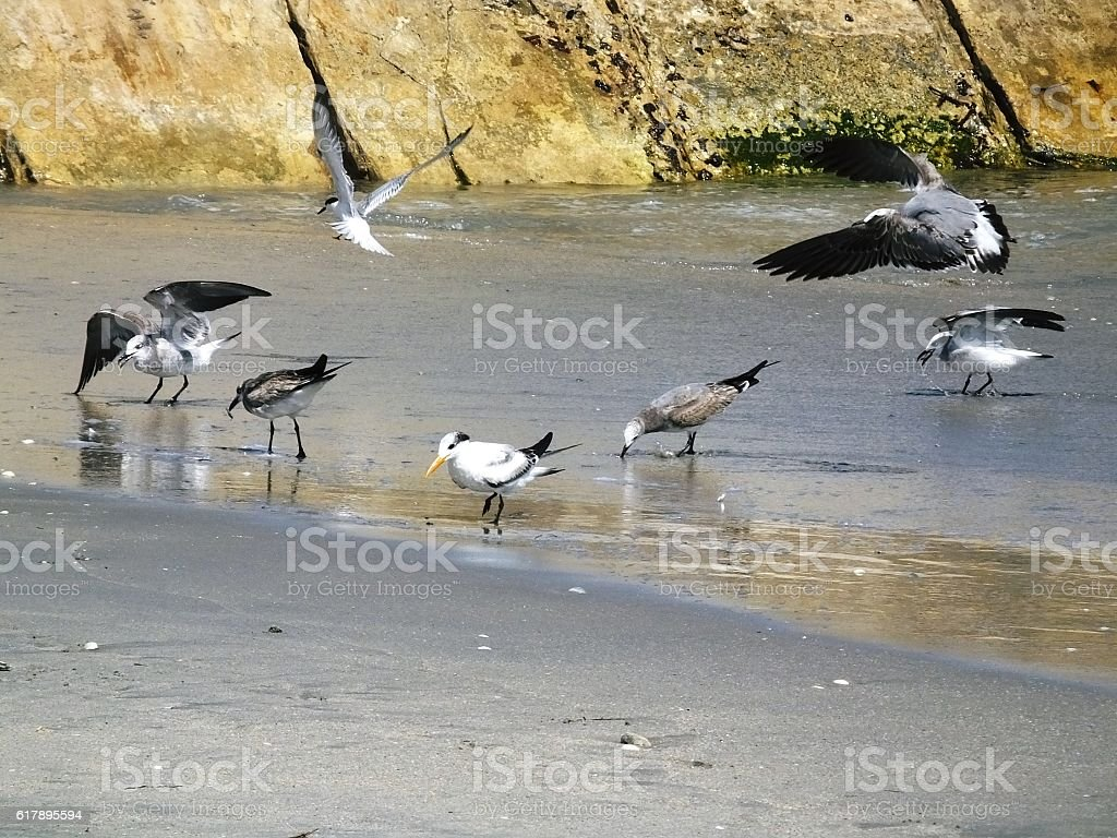 Various Shorebirds stock photo