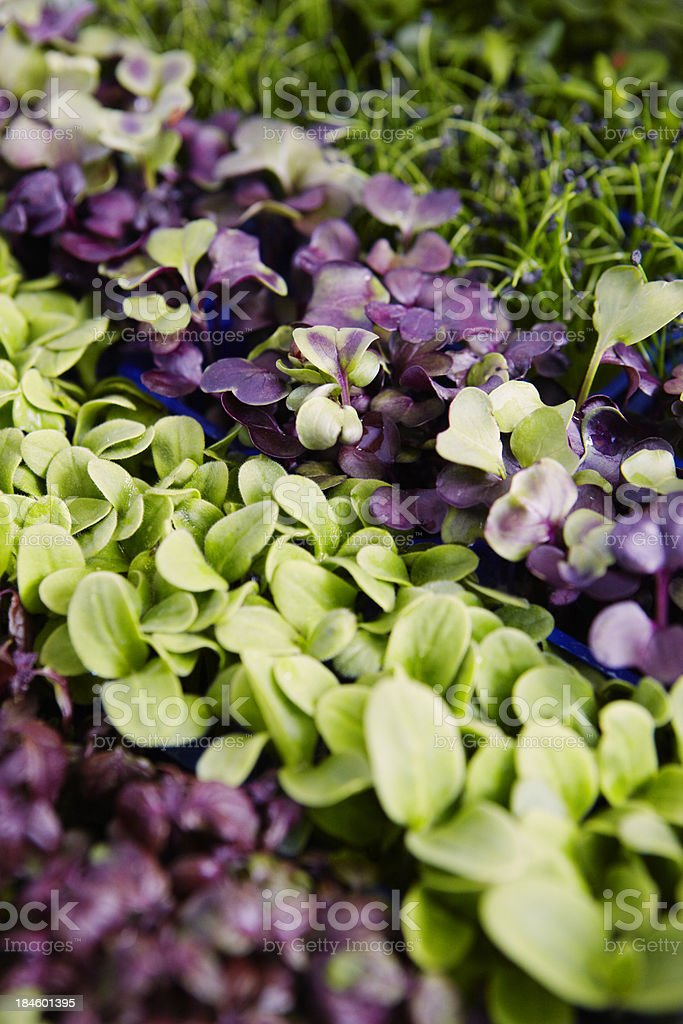 Various Specialist Watercress royalty-free stock photo