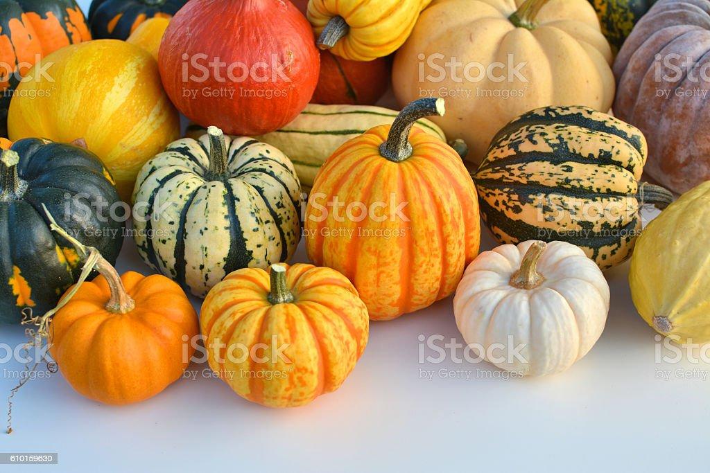 Various squashes and pumpkins stock photo