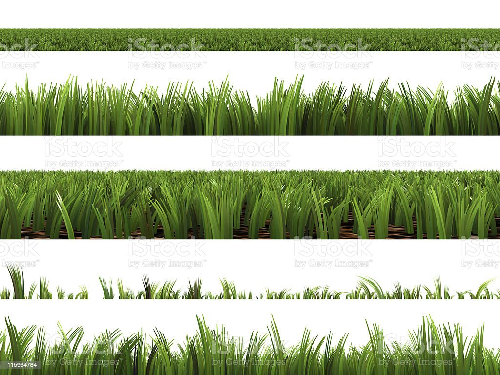Various types of green grass and how tall they are stock photo
