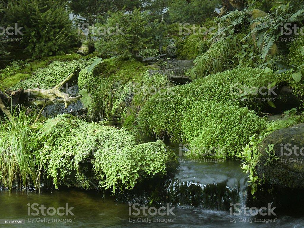 various waterside vegetation royalty-free stock photo