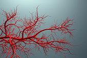 vascular system - veins full of blood