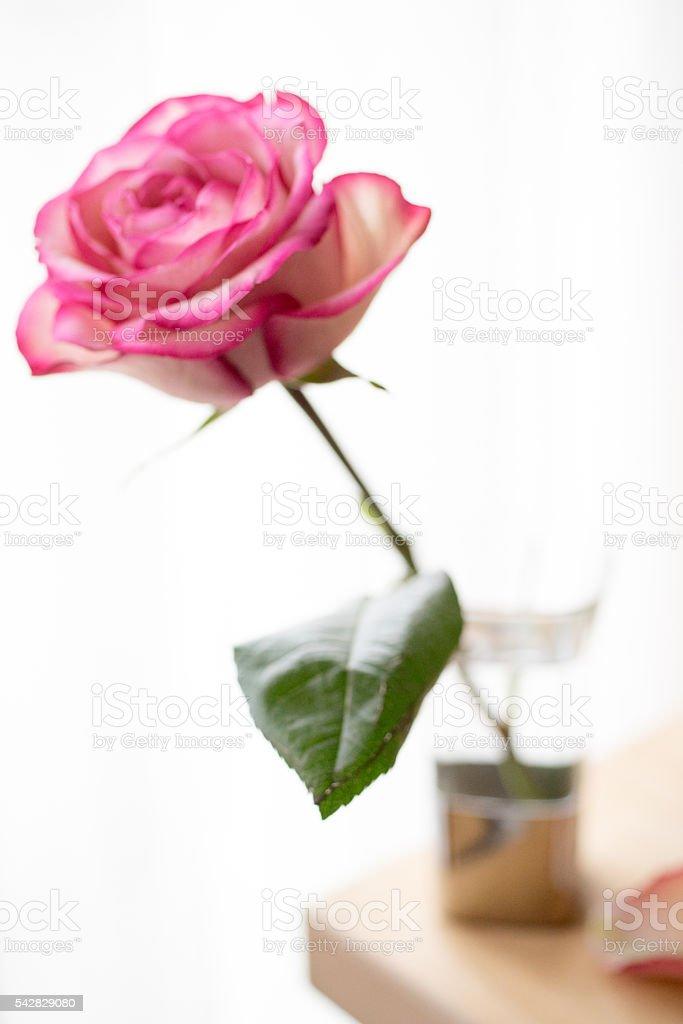 Vase et de rose roses photo libre de droits
