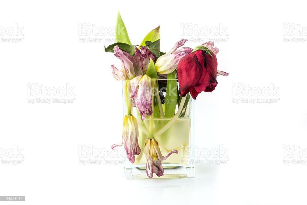 Vase Full Of Withered And Dead Flowers stock photo 466648474   iStock