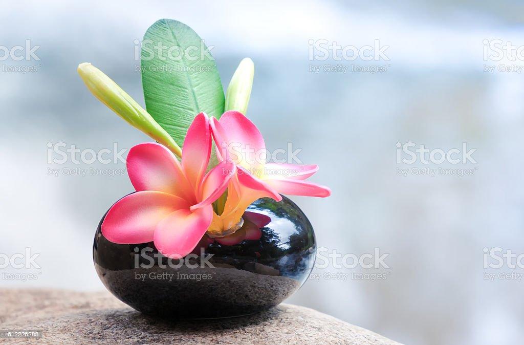Vase of plumeria or frangipani flower stock photo