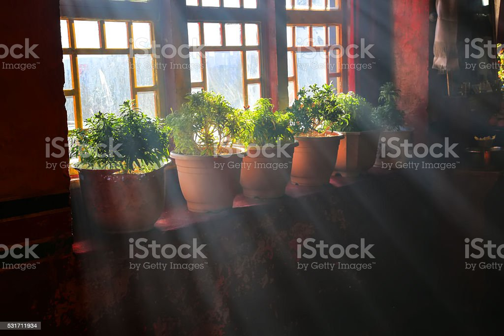 Vase with a flower on the windowsill country house. stock photo