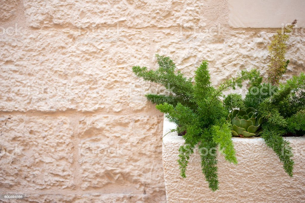Vase with plant and wall stock photo