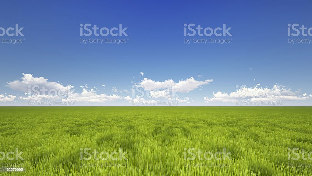 Vast green field with blue sky stock photo