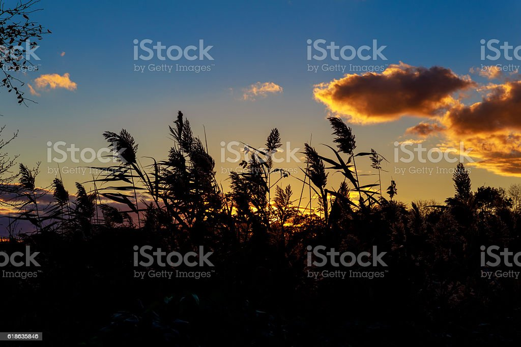 Vast orange speckled clouds form bowl in Autumn sunset sky stock photo