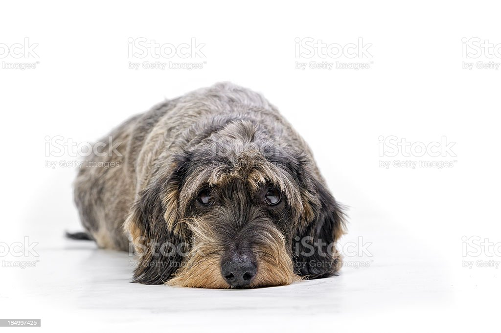 I've been bad! stock photo