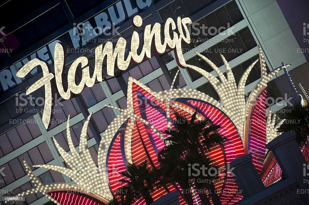 Vegas Flamigo stock photo