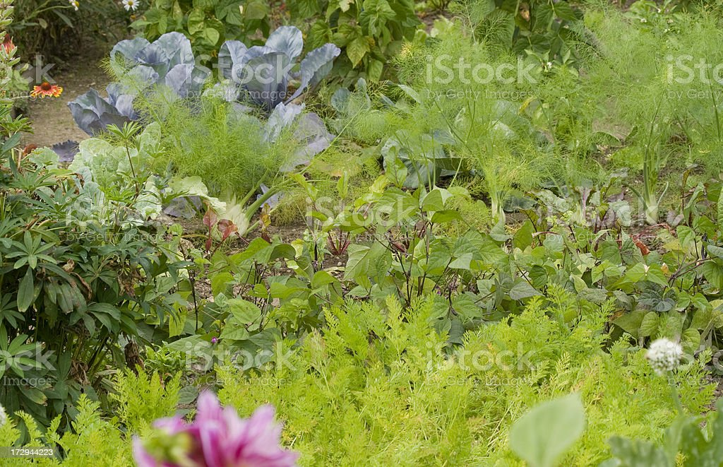 vegetable and flower garden royalty-free stock photo