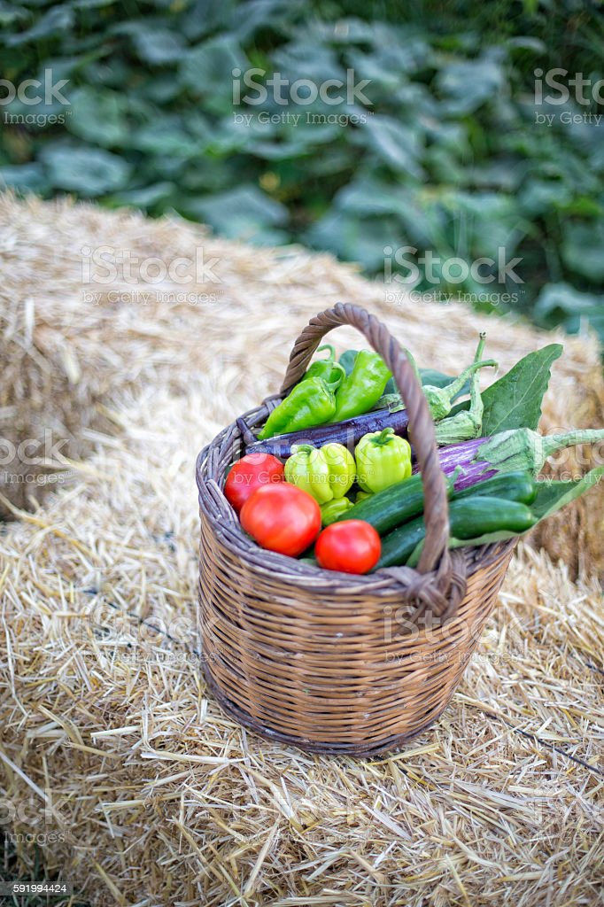 Vegetable Basket On The Straw Bale - Stock Image 0060 stock photo