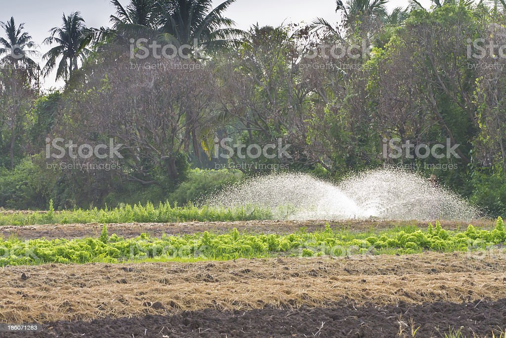 Vegetable farm stock photo