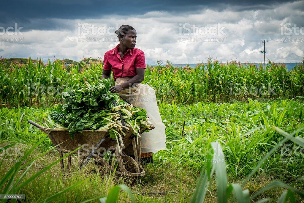 Vegetable Farmer stock photo