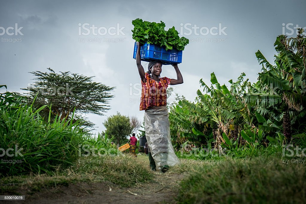 Vegetable farmer stock photo