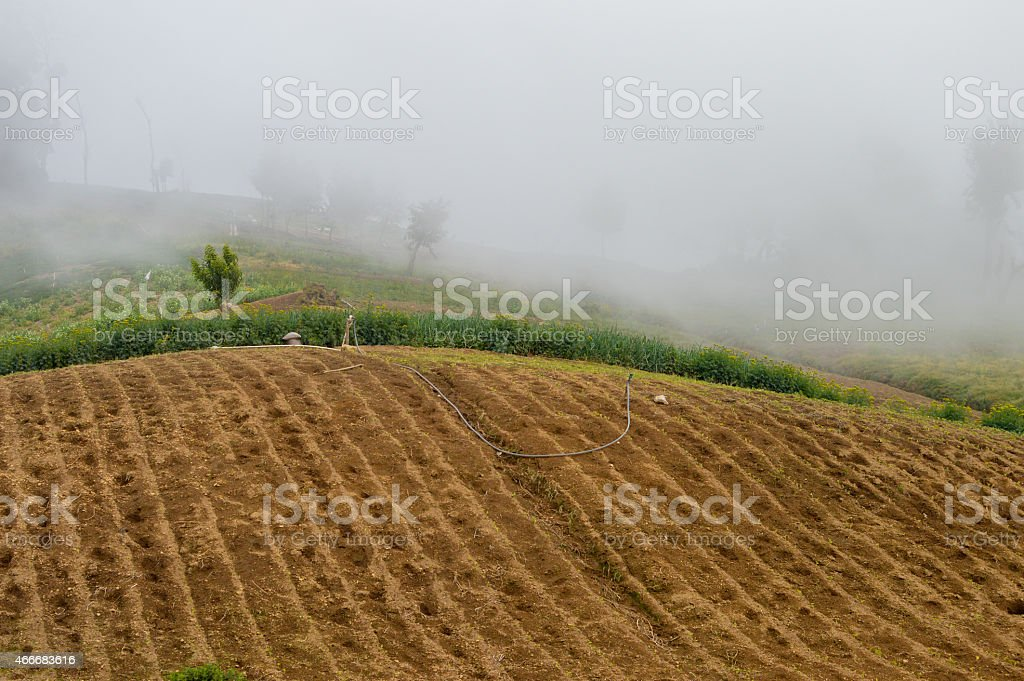 Vegetable farms covered by the fog near Zunil, Guatemala stock photo