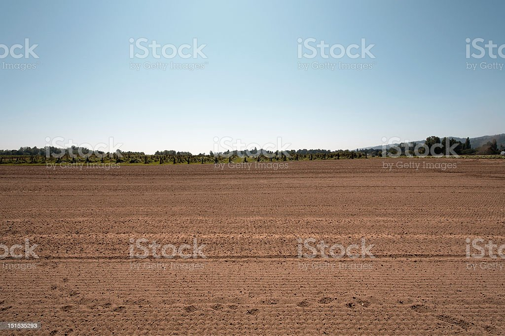 Vegetable field with berry field in background stock photo