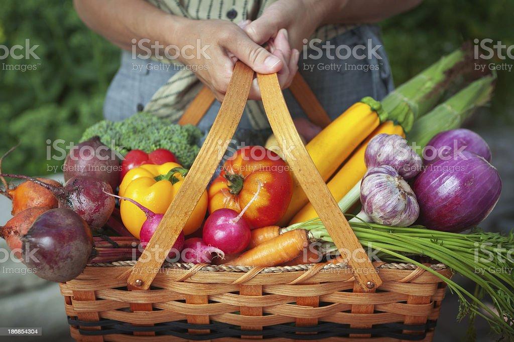 Vegetable Garden Basket of Fresh Food Harvest from Organic Gardening stock photo