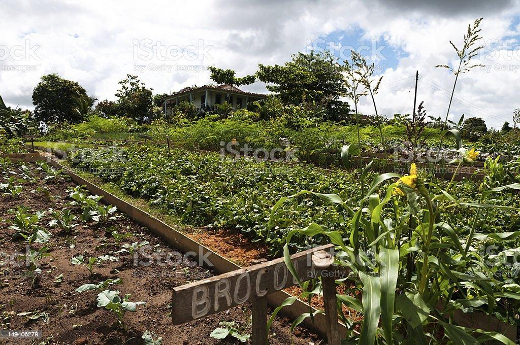 Vegetable Garden in Vinales Valley, Cuba stock photo