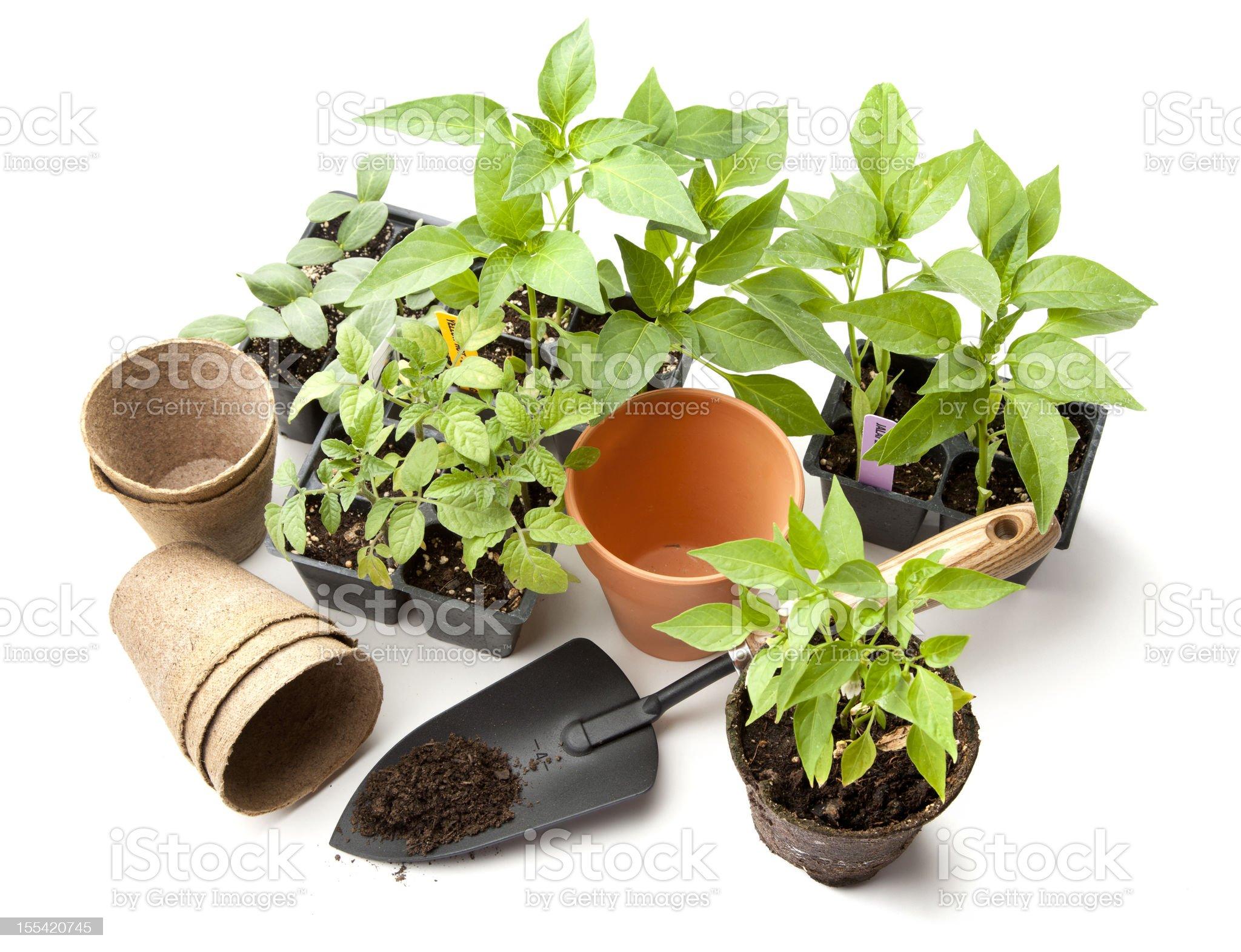 Vegetable Gardening Items royalty-free stock photo