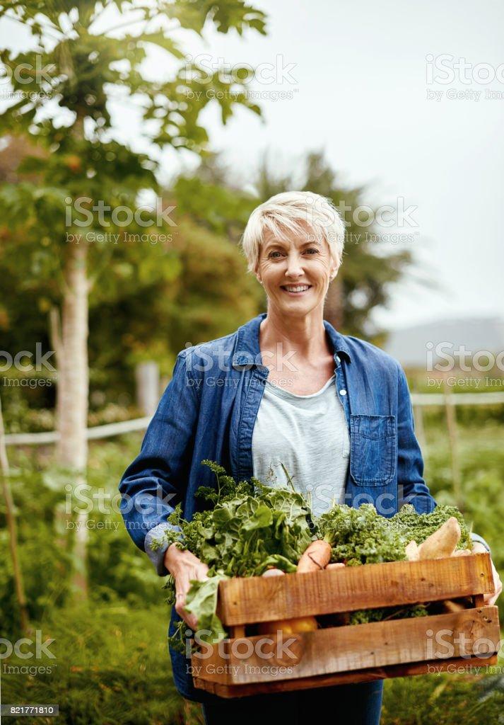 Vegetable gardens bring special rewards stock photo