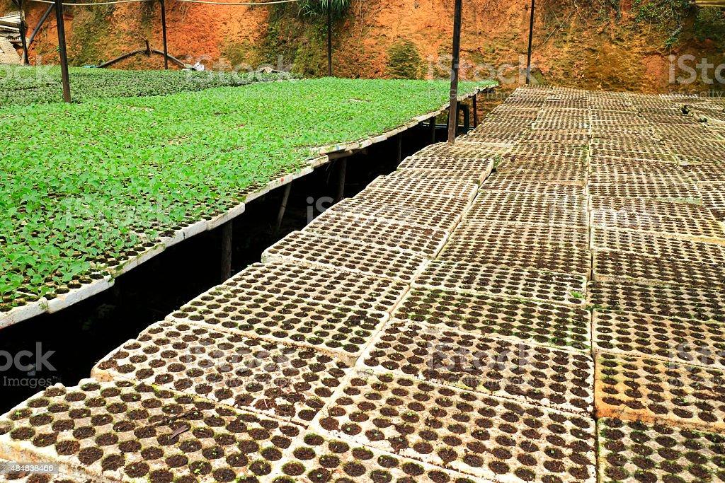 Vegetable green-house- nursery garden for local Dalat Farmers stock photo